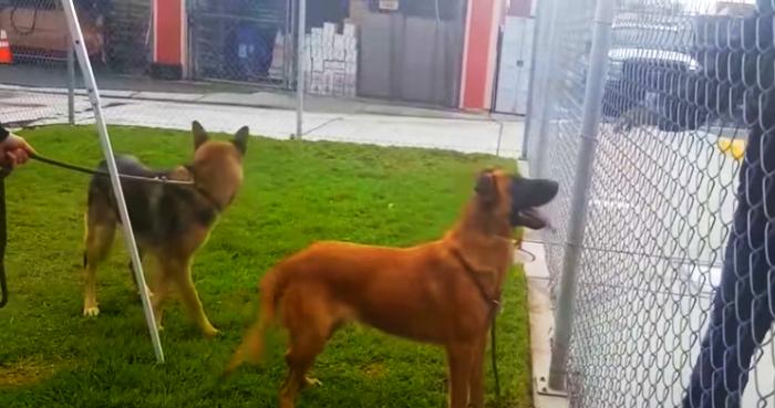 Izgubljeni pas u skloništu sreo svoje bivše vlasnike – a oni mu slomili srce!